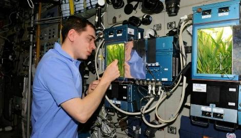 Растения в космосе: это возможно?