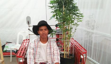Новые правила каннаиндустрии в Таиланде