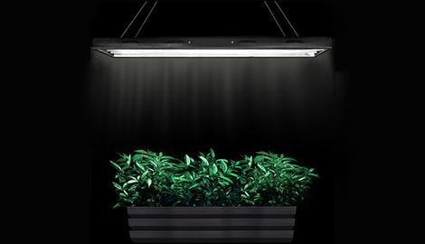 Т5 против компактных люминесцентных ламп: что эффективнее?