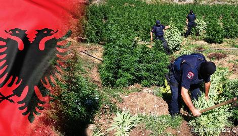 Премьер-министр Албании готовит страну к легализации каннабиса