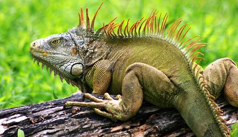 Динозавр пожрал весь урожай