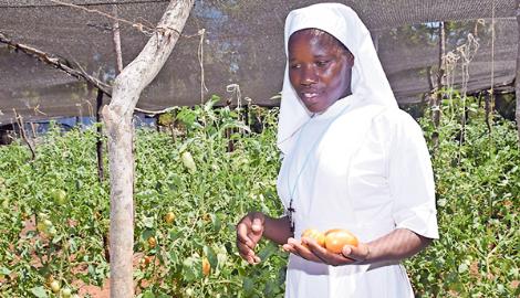 Почему фермеры в Африке используют сетки вместо теплиц?