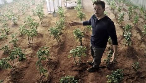 И на Марсе будет картофан расти...