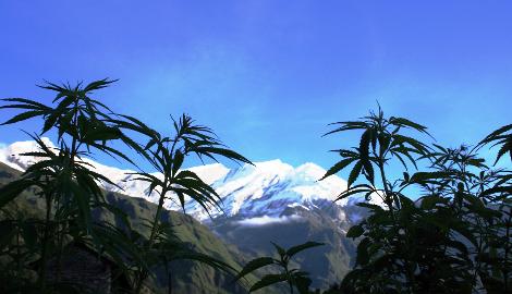 Непал может легализовать марихуану и запретить алкоголь