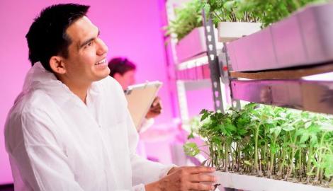 Вертикальные фермы не могут быть прибыльными?