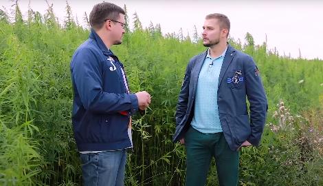 Видео: Легальная конопля в Мордовии