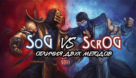 SoG против ScrOG: в чем отличия двух методов