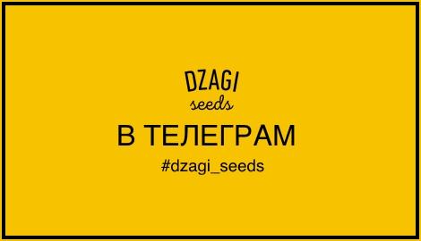 DzagiSeeds теперь в telegram!