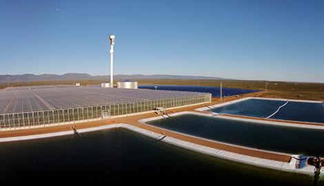 Экоферма выращивает помидоры с помощью морской воды