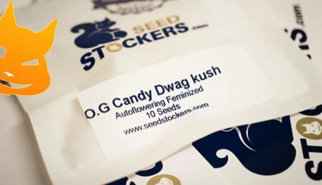 Автоцветущие семена OG Candy Dawg Kush. Легкое выращивание каннабиса в индоре вместе с Seed Stockers.
