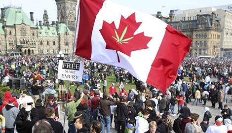 Как Канада решила легализовать каннабис ради детей