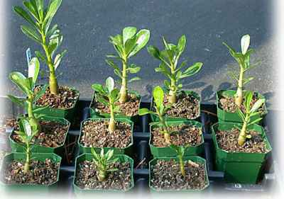 Проблемы проращивания в земле