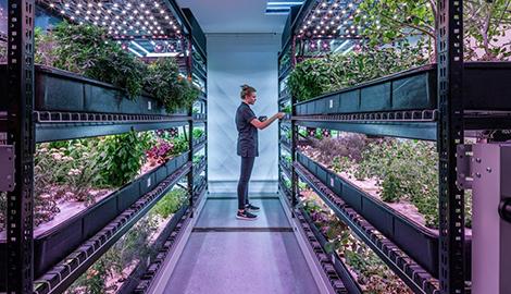Вертикальная ферма снабжает зеленью лучшие рестораны в Нью-Йорке