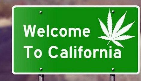 10 лучших сортов каннабиса 2020 года из Калифорнии