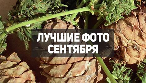 Подборка фотографий сентября
