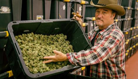 Джеймс Белуши о медицинской марихуане