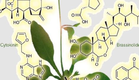 Гормоны растений