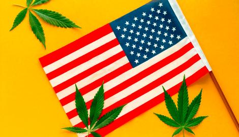 США: как легализация каннабиса повлияла на здоровье населения