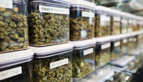 Невада запретила отказывать в работе любителям марихуаны