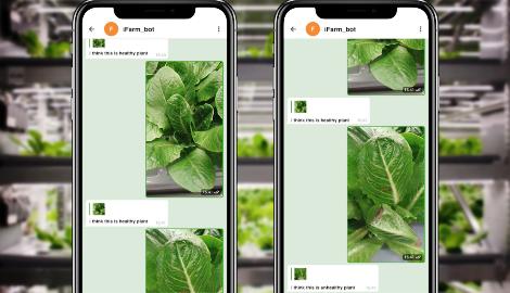 Искусственный интеллект обучают распознавать здоровье растений