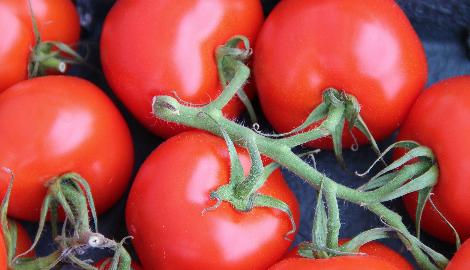 Почему в России безвкусные помидоры?