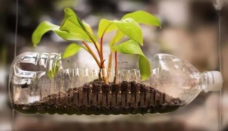 Выращивание растений в пластиковых бутылках