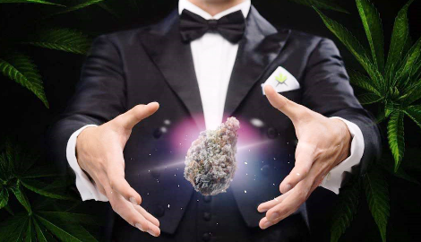 Видео: Полезные свойства марихуаны