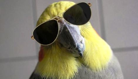 В Бразилии арестовали попугая-наркоторговца