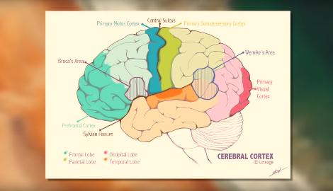 Видео: Негативное влияние алкоголя и каннабиса на мозг (сравнение)