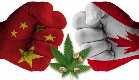 В Китае вспыхнула волна истерии против каннабиса