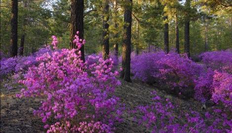 Весенние фестивали цветов