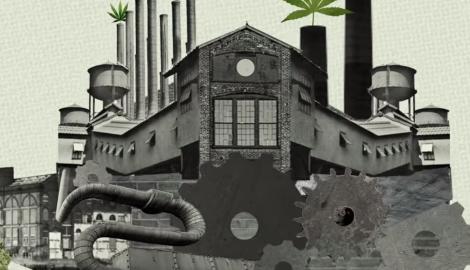Видео: самая большая компания по производству каннабиса