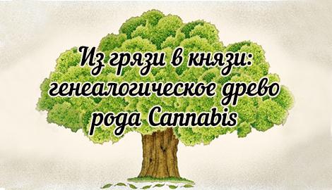 Генеалогическое древо рода Cannabis