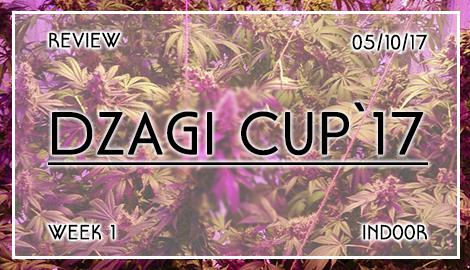 Новости DzagiCup17. Обзор индора. Неделя 1