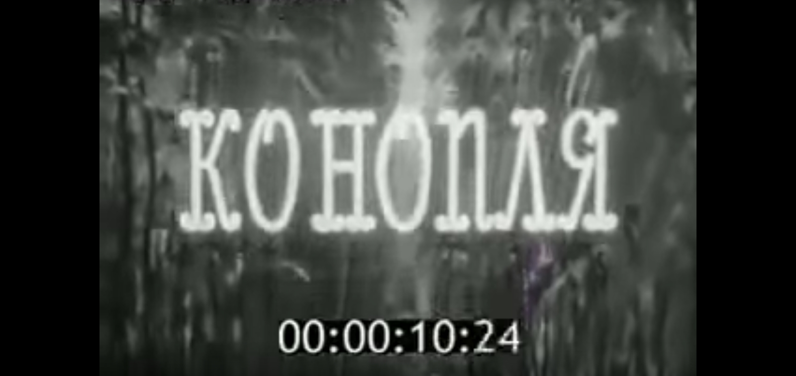 """ЦентрНаучФильм представляет фильм """"Конопля"""""""
