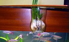 Аквапоника на рыбьих силах
