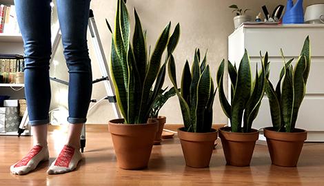 Скорая ботаническая помощь