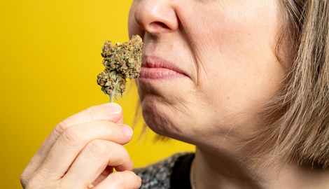 Чем НЕ должны пахнуть шишки