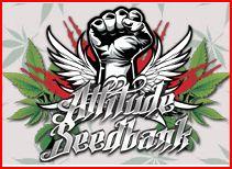 Брендовые бейсболки от Attitude Seedbank