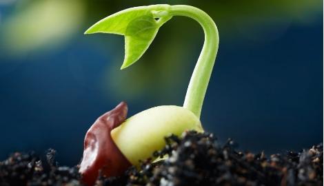 В Ростове изобрели «инкубатор» для проращивания семян