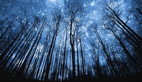 Ученые обнаружили, что деревья тоже могут спать