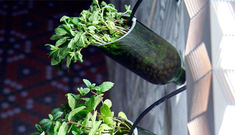 Настенный гидропонный сад из бутылок из-под вина