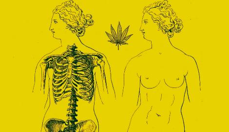 Женщина и трава. История применения каннабиса для женского здоровья