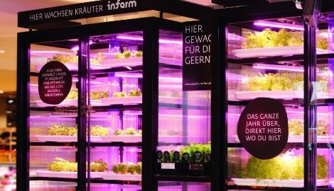 Немцы выращивают зелень прямо в супермаркетах