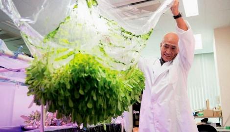 В Японии умеют выращивать растения на гидрогелевой пленке