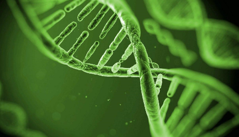 Исследователи расшифровали геном дикорастущей конопли