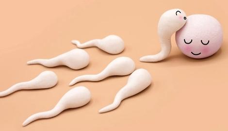 Курение увеличивает количество сперматозоидов?