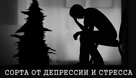 Сорта от депрессии и стресса