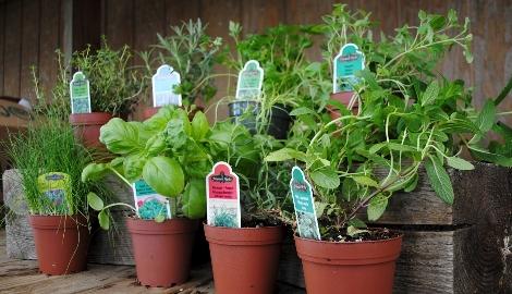 Изменение спектра света улучшает вкус растения