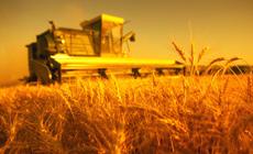 В штате Иллинойс, США, пришло время сбора урожая